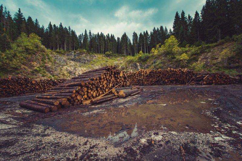 田舎で出来る仕事11:自伐林業